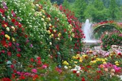 Парк Уол Роуз - Иерусалим