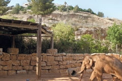 Библикал Зоо - Иерусалим